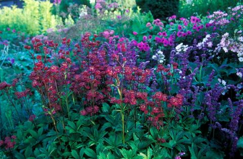 garden-ideas-on-a-budget-plants