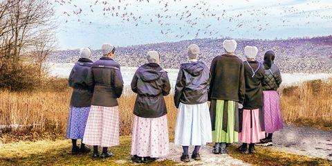 Bird, Interaction, People in nature, Bird migration, Animal migration, Flock, Wing,