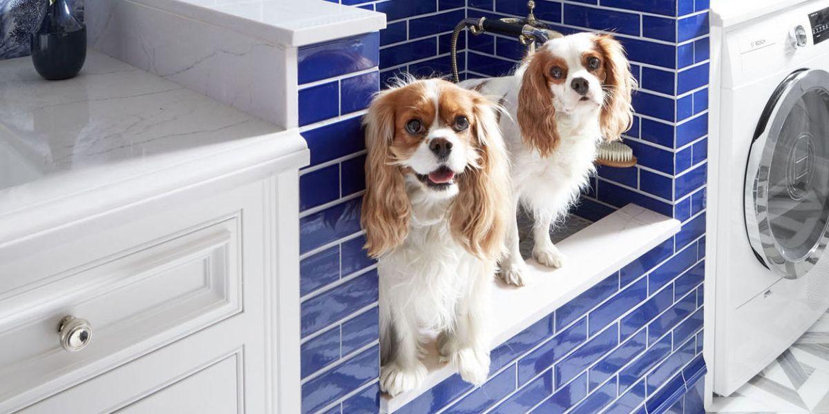 Laundry Room Inspiration Dog Shower Ideas