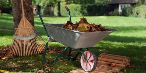 15 Tasks Landscapers Say You Should Do in Your Yard Every Fall