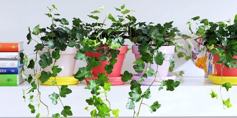 """""""Bedroom Plants"""" Are Just What You Need to Sleep Better at Night"""