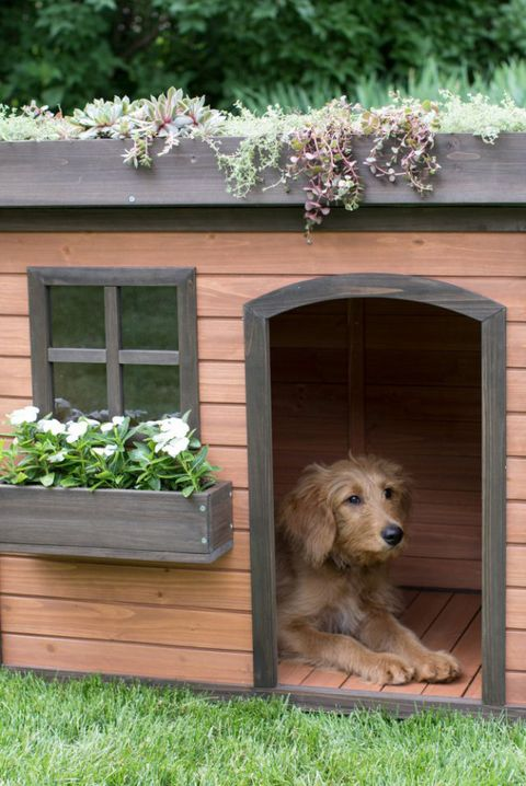 12 Best Fancy Dog Houses Cool Luxury Dog Houses To Buy