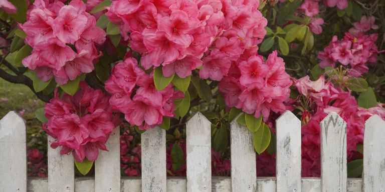 Do You Have These Deadly Plants at Home?