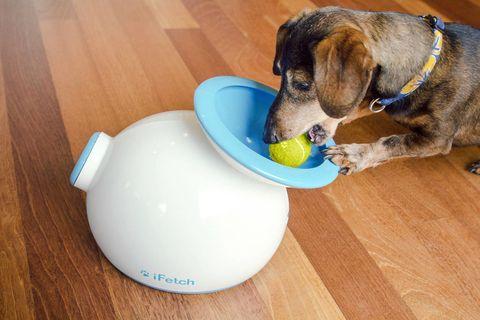 Wood, Blue, Dog breed, Hardwood, Dog supply, Flooring, Floor, Dog, Wood stain, Carnivore,