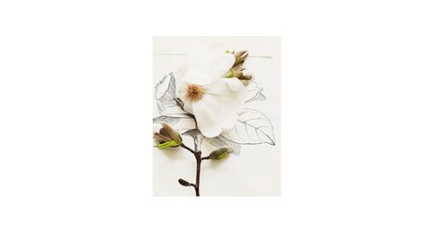 magnolia bug kari herer