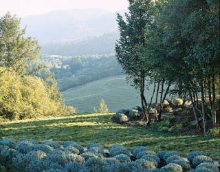 Romantic view of St. Helena, California