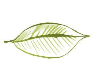 illustration of green leaf
