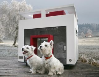 two white dogs in front of white and red cubix dog house