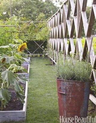 vegetable garden wooden fence and large planter with lavender