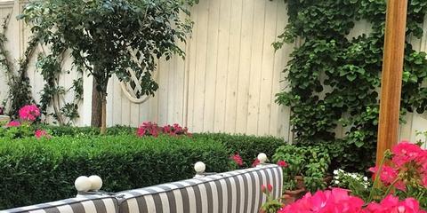 Plant, Petal, Shrub, Flower, Garden, Groundcover, Annual plant, Door, Deck, Yard,