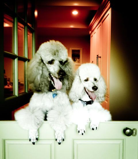 eric cohler dogs