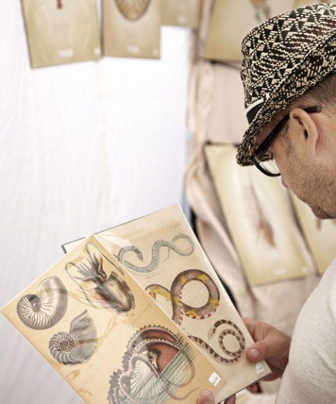 san francisco antique fair man looking at vintage sea creature prints