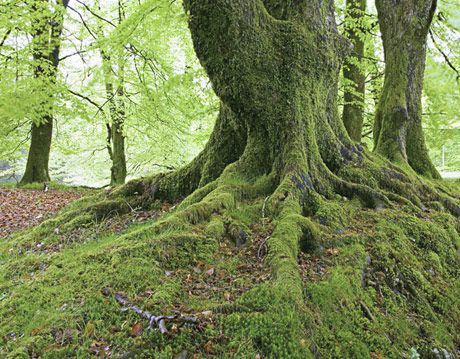 a moss covered tree