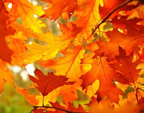 how to paint fall leaves on a tree