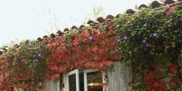 view of window with faded wood shutters and vines