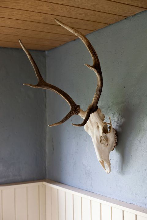 taxidermy head