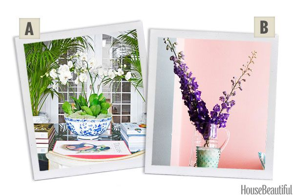 Would You Rather: Orchids or Delphiniums?