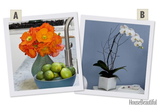 Would You Rather: Poppies or Orchids?