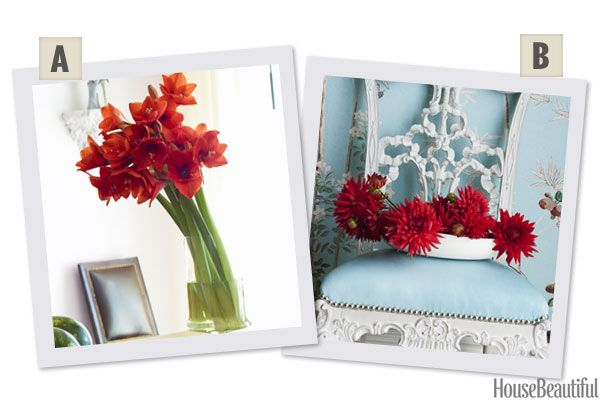 Would You Rather: Amaryllis or Dahlias?