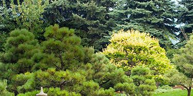 Vegetation, Water resources, Garden, Pond, Reflection, Botany, Watercourse, Water feature, Botanical garden, Landscaping,