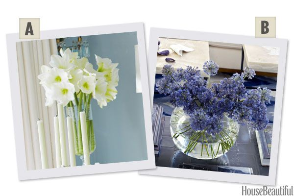 Would You Rather:Amaryllis or Alliums?