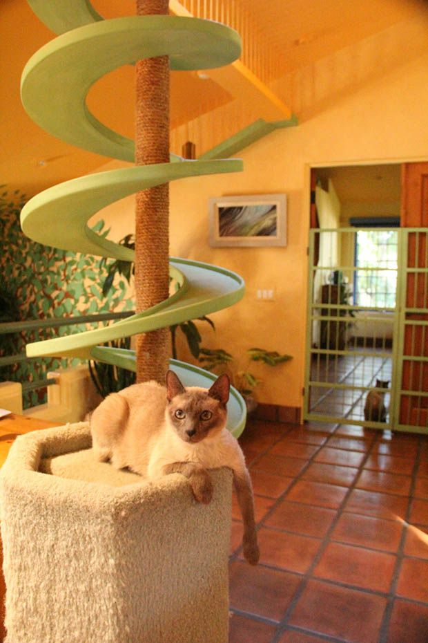 Think Your Home Is Cat-Friendly? 9 Rooms That Will Put You To Shame