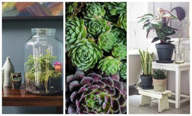 The Top 10 Indoor Gardening Tips