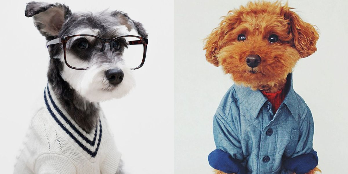 Stylish Dogs On Instagram - Mr Porter Channels Menswear Inspiration From Chic Dogs On -3020