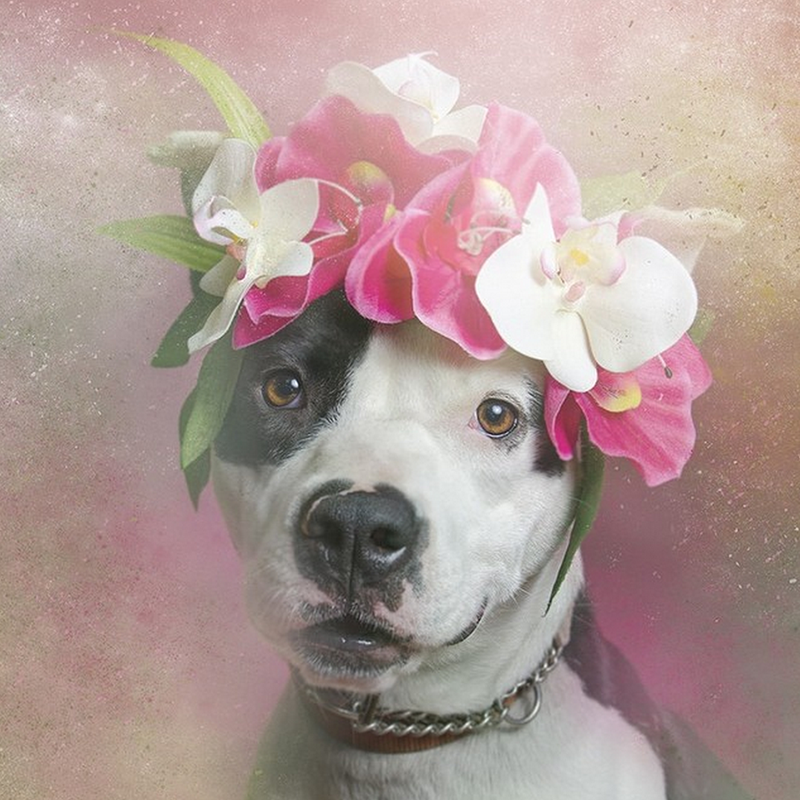 "Orchids for Fancy. ""After researching, I found out that more than one million pit bulls are euthanized each year in the US,"" she said. ""Then the project started feeling more important to me."" 
