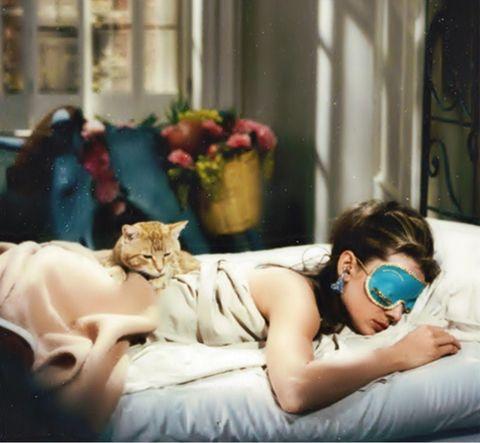 Photograph, Room, Comfort, Photography, Nap, Companion dog, Felidae, Love,