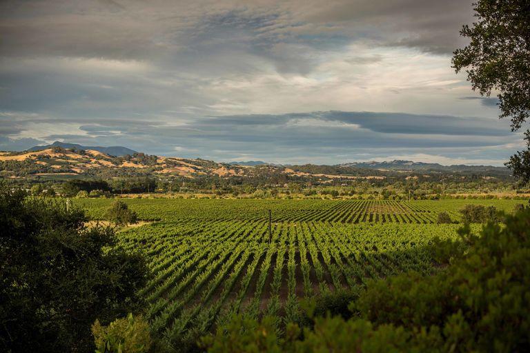 The New California Wine Destination: Healdsburg
