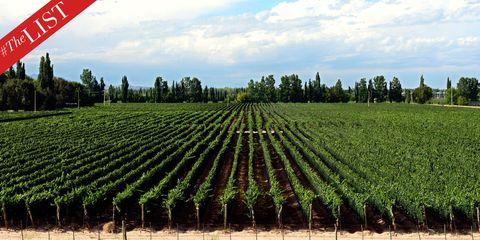 Vegetation, Agriculture, Plant community, Field, Plantation, Farm, Land lot, Rural area, Crop, Soil,