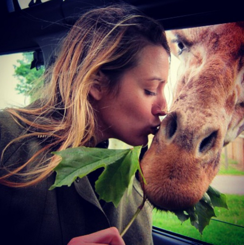 Jaw, Adaptation, Snout, Brown hair, Long hair, Fawn, Blond, Love, Working animal, Kiss,