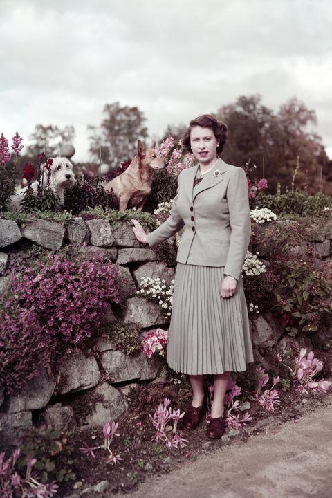 <p>1952</p>