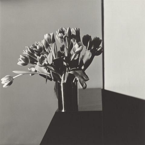 <p><em></em><em>Tulips</em>, 1978 </p>