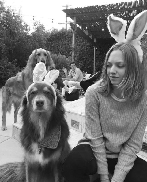 "<p>A rescue dog adopted in 2009, Amanda Seyfried's Australian Shepherd is always by her side, whether they're grabbing tea or paddle-boarding on vacation. Follow him <a href=""https://www.instagram.com/finnsite/?hl=en"" target=""_blank"">@finnsite</a>, where he has 16.3k fans. </p>"