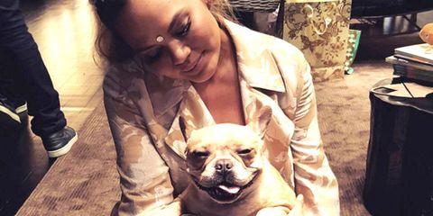 Dog breed, Carnivore, Dog, Vertebrate, Mammal, Facial expression, Snout, Fawn, Companion dog, Toy dog,