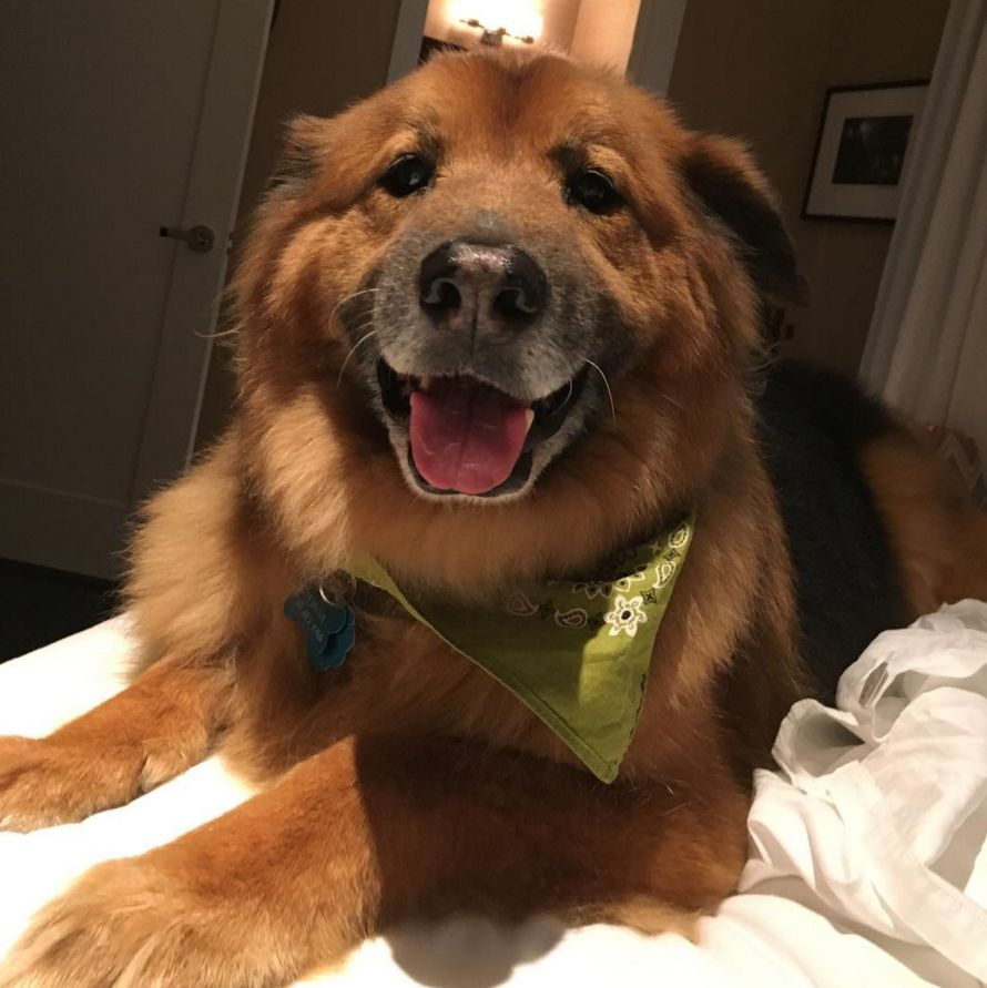 <p>An avid dog lover, Chelsea Handler adopted this German Shepherd chow mix from a rescue shelter in 2009. Chunk can be spotted flying first class with Handler and even made regular appearances on her late night show.</p>