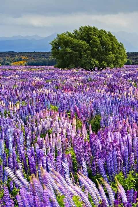 40 Most Beautiful Places In The World Add These Destinations To Your Travel Bucket List,Best Plants To Grow Indoors Without Sunlight