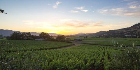Sky, Agriculture, Farm, Field, Landscape, Plantation, Rural area, Land lot, Plain, Highland,