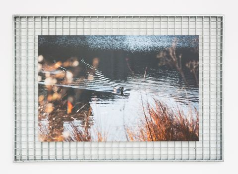Rectangle, Bird, Wetland, Marsh, Fen, Photographic paper, Freshwater marsh, Painting, Ducks, geese and swans, Water bird,