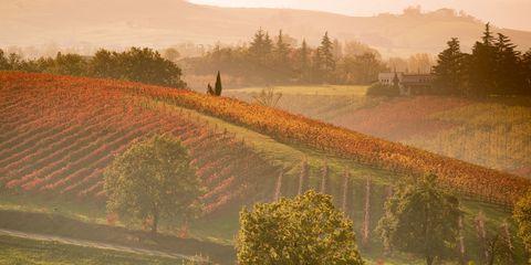 Tree, Landscape, Agriculture, Farm, Field, Rural area, Plantation, Plain, Art, Morning,