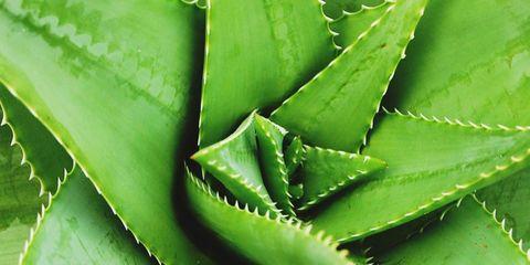 Nature, Green, Blue, Daytime, Leaf, Photograph, White, Line, Terrestrial plant, Botany,