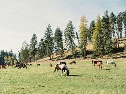 Grazing, Natural landscape, Natural environment, Pasture, Landscape, Tree, Plain, Grassland, Terrestrial animal, Ranch,