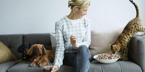 Human, Dog breed, Vertebrate, Comfort, Mammal, Dog, Sitting, Carnivore, Couch, Felidae,