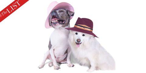Dog breed, Collar, Dog, Carnivore, Vertebrate, Pink, Dog collar, Jaw, Pet supply, Snout,