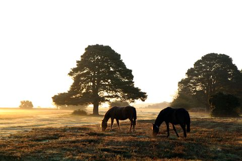 """<p>The beauty of Hampshire's New Forest National Park rivals that of more well-known English vacation spots like the Cotswolds and is just 90 miles south of London. Spend your days exploring what used to be the royal hunting ground of William&nbsp;the Conqueror on horseback or bicycle, and your nights relaxing at <a href=""""http://www.chewtonglen.com/"""" target=""""_blank"""" data-tracking-id=""""recirc-text-link"""">Chewton Glen</a>, a classic countryside estate with one of the area's best spas.</p>"""
