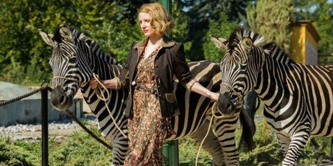Zebra, Terrestrial animal, Wildlife, Vertebrate, Mammal, Nature reserve, Wilderness, Safari, Organism, Adaptation,