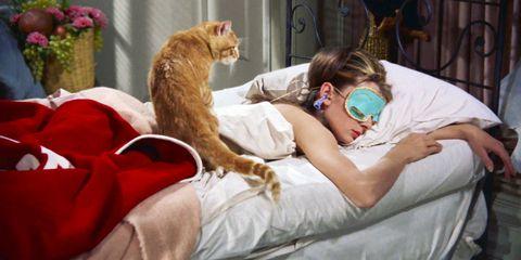 Felidae, Cat, Small to medium-sized cats, Room, Nap, Carnivore, Furniture, Sleep, Fur, Fawn,