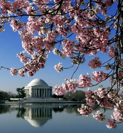 <p>You can't beat D.C. in the spring, with cherry blossoms blooming in mid-April and the city hitting just the right temperature. You'll beat the summer crowds (and temps) and avoid the freezing cold of winter. The annual Cherry Blossom Festival hits March 20 – April 16, and you can expect not only amazing natural views, but also cool programs put on by many businesses in the area, including hotels offering seasonal specials. Examples? The Rosewood Washington D.C. has a special (with an in-room cherry blossom tea service, tour of the festival, and more), along with The Jefferson, The Ritz-Carlton, The St. Regis, The Willard InterContinental, The Mandarin Oriental and the W.<br></p>